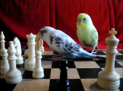 BirdChess