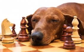 dog_tired